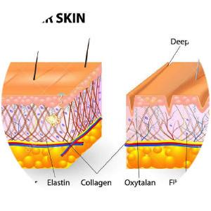 elastine huid